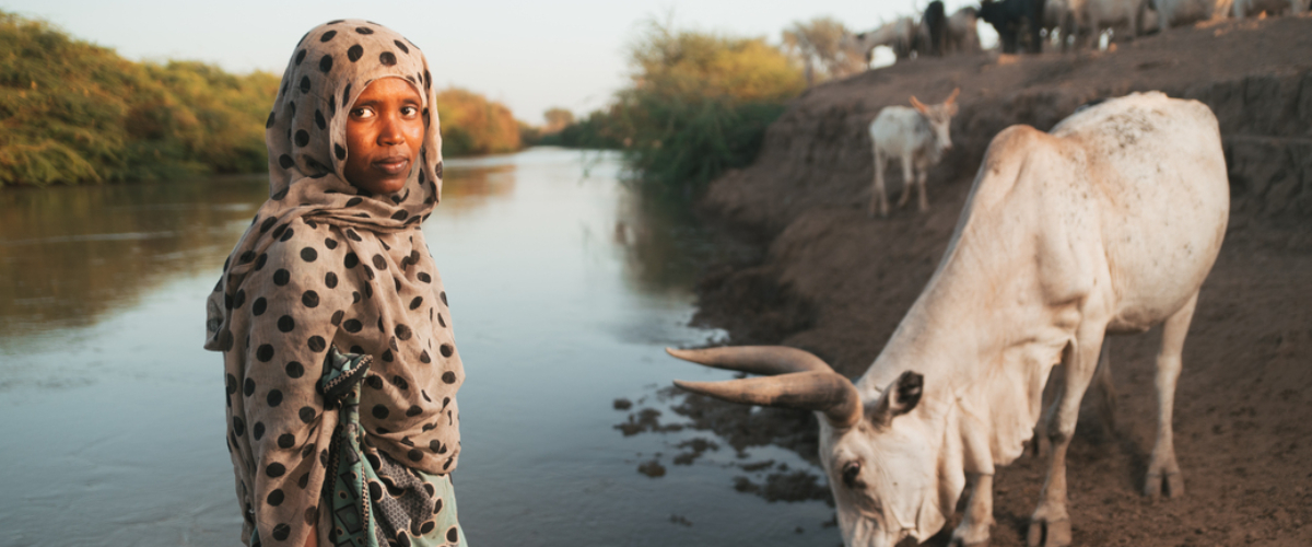 Building Resilience and Recovery for 2,000 Pastoralist Households in the Afar region of Ethiopia, following Drought, Locusts and Displacement.